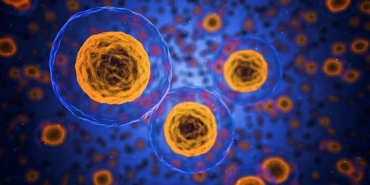 Qué tecnología se usaría para evitar el envejecimiento celular